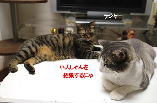 27-8-1-bのコピーのコピー.jpg