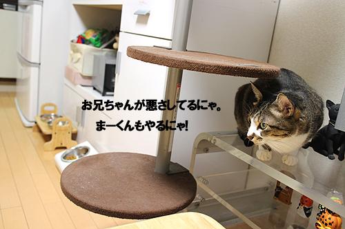 28-11-1-cのコピー.jpg