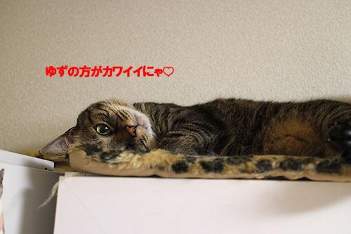 28-11-11-aのコピー.jpg