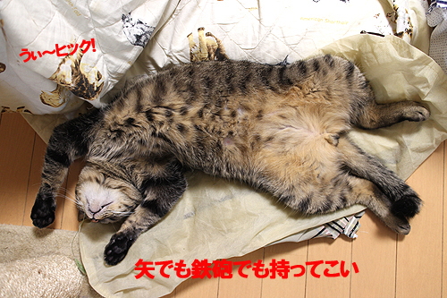28-6-27-nのコピーのコピー.jpg