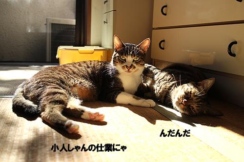29-1-11-aのコピー.jpg
