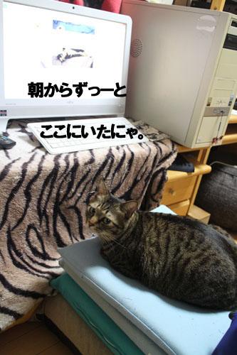 29-1-24-cのコピー.jpg