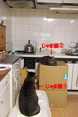 29-3-23-aのコピー.jpg