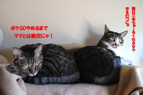 29-4-25-iのコピーのコピー.jpg