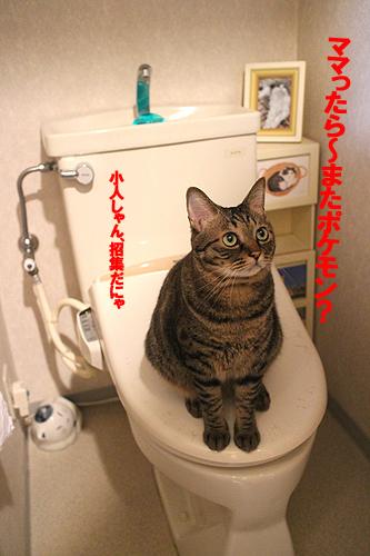 29-4-29-aのコピーのコピー.jpg