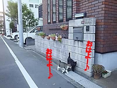 29-5-24-cのコピー.jpg