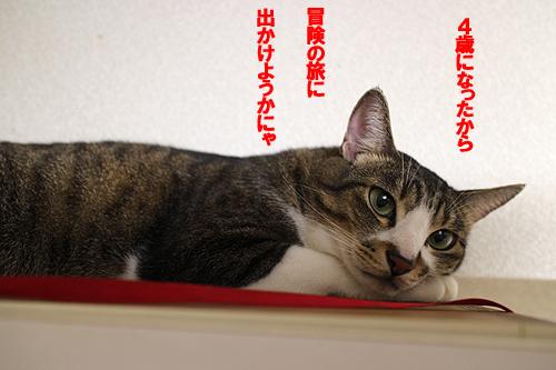 29-5-7-aのコピー.jpg