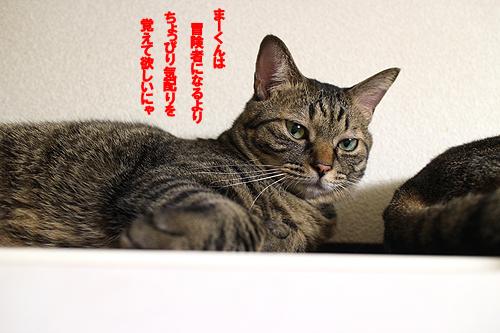 29-5-7-bのコピー.jpg