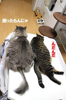 29-7-18-aのコピーのコピー.jpg