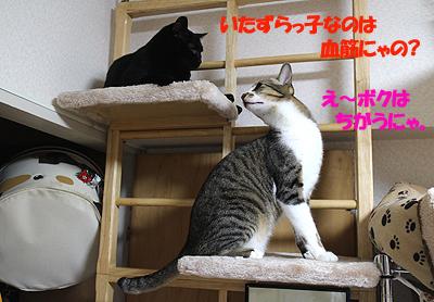 26-5-14-eのコピーのコピー.jpg