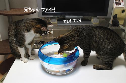 27-7-16-aのコピー.jpg