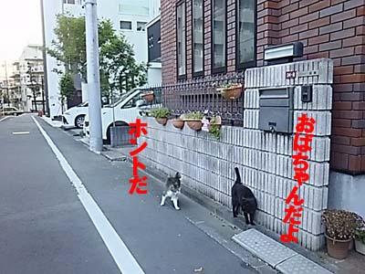 29-5-24-bのコピー.jpg