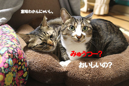 30-2-13-aのコピーのコピーのコピー.jpg