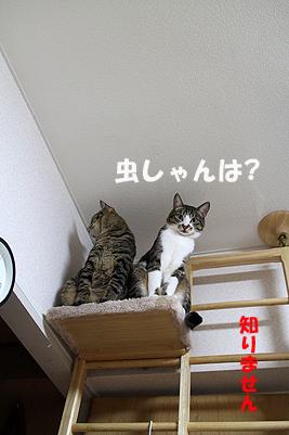 30-5-25-bのコピーのコピー.jpg