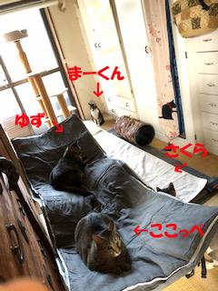 31-5-3-aのコピー.jpg